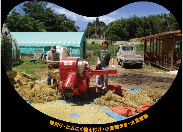 稲刈り・にんにく植え付け・小麦種まき・大豆収穫