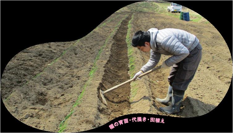 稲の育苗・代搔き・田植え